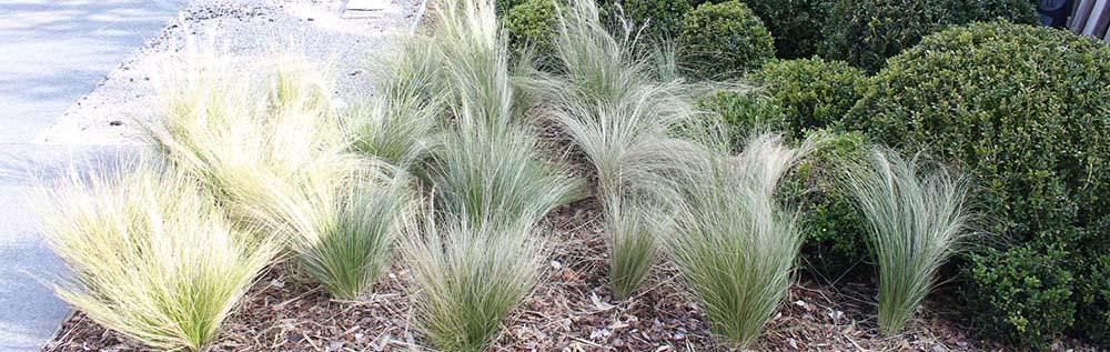 banner-grassen